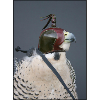 Ron Rollins Size 39mm Falconry Hood