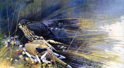 merlin with dove by jonathan wilde nafa print see larger image